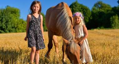 Z końmi w słońcu latem